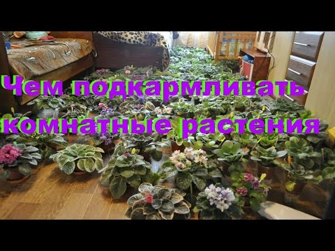 Как заработать дома на цветах