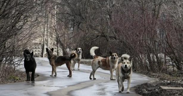 Жителям Светлограда недает прохода стая бездомных собак