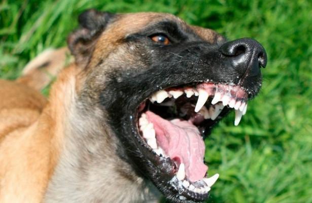 Американцу отрезали обеноги после того, какеголизнула собственная собака