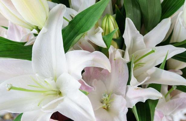 Молодой житель Вологды украл букет цветов, чтобы порадовать возлюбленную