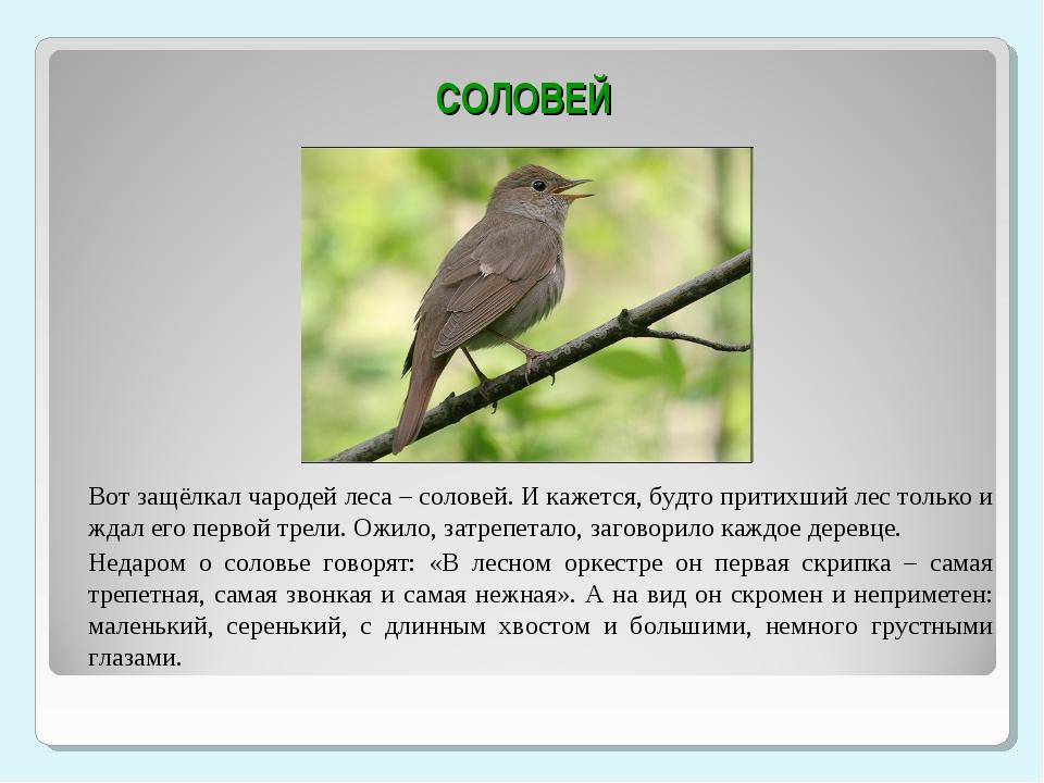 Как пишется птицы запоют