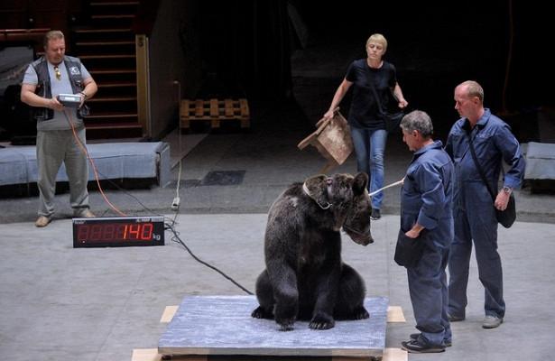 Вцирке наВернадского отказались усыплять медведя, напавшего насотрудника