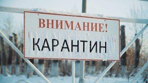 ВКуменском районе введен карантин побешенству