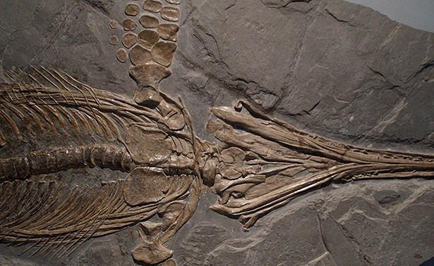 Древние останки ихтиозавра нашли вРоссии