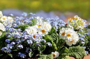 Почти 100цветочных клумб будут украшать Иркутск этим летом