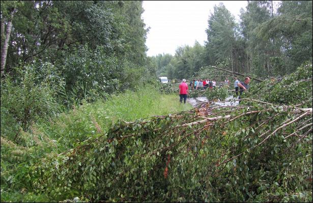 ВРыбинском районе дороги завалило деревьями: видео