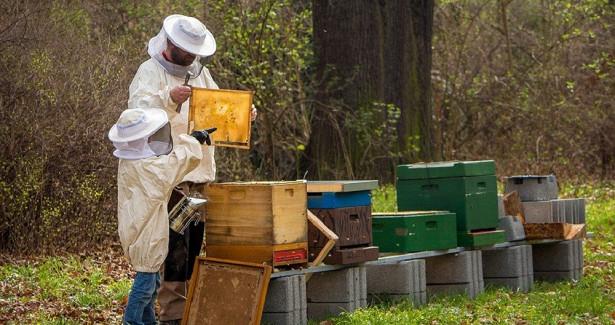Сельское хозяйство оказалось главной причиной гибели пчёл