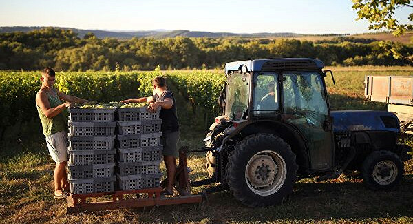 ВРоскачестве спрогнозировали качество вин2020 года