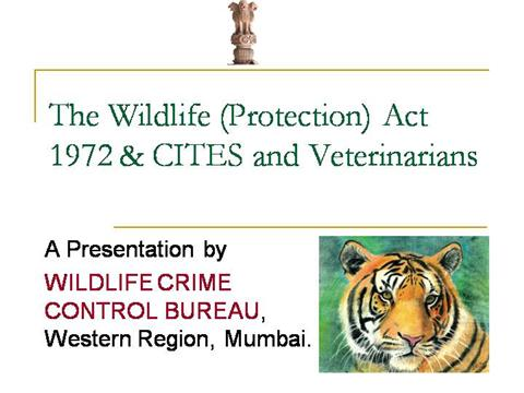 Essay on wildlife protection