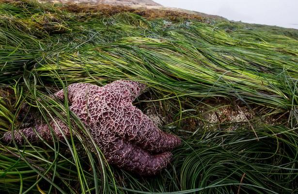 Успособности экосистемы адаптироваться кизменениям среды обнаружили предел
