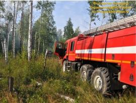 ВКадомском районе пытаются потушить лесной пожар