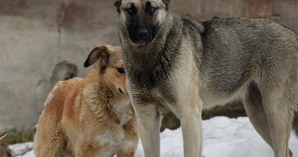 Глава СКпоручил помочь детям, накоторых напали собаки подМурманском иОренбургом