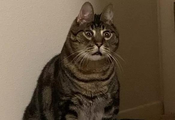 Котсостранной мордой покорил Сеть