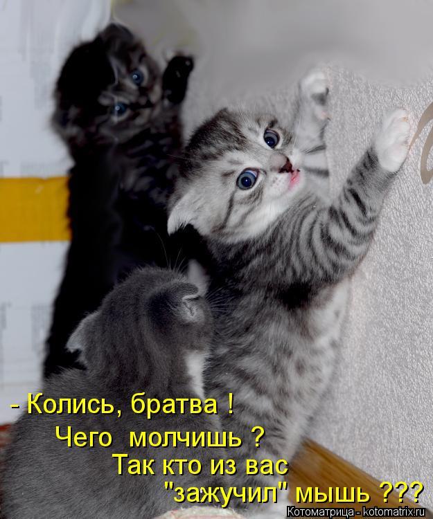 Варяг - Александр Мазин - страница 73 - LoveReadec