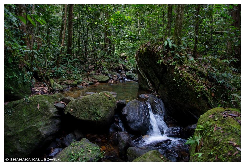 Sinharaja rain forest essay