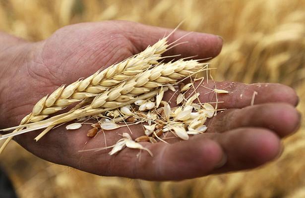 Египет отказался отроссийской пшеницы из-завысоких цен