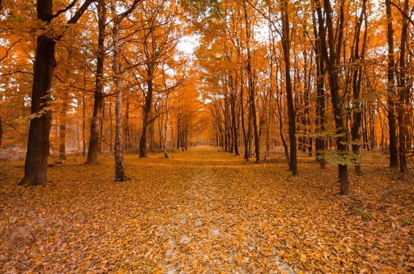 ВПетербурге появится 20новых парков