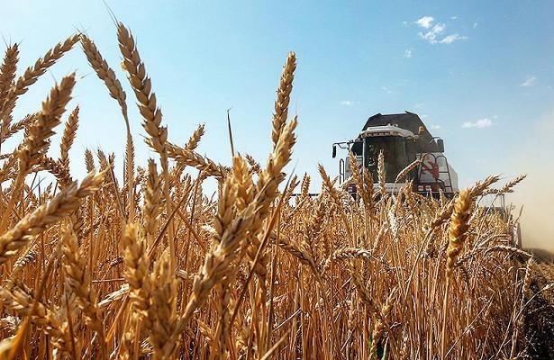 ВРоссии спрогнозировали снижение урожая пшеницы