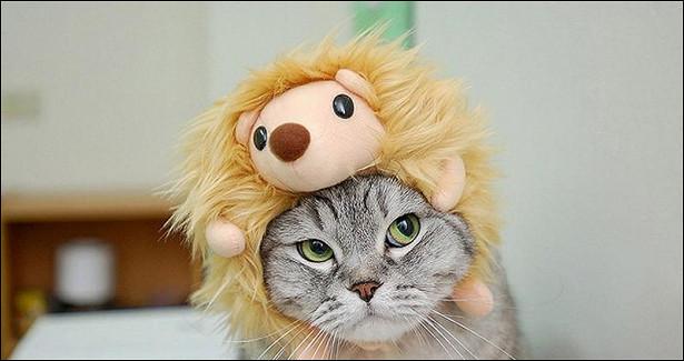 Чемежики лучше кошек