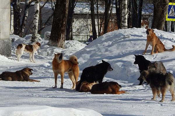 Собаки-убийцы иличеловеческое безразличие?