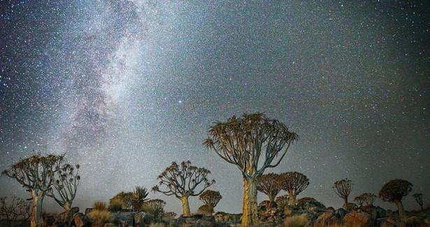 «Алмазные ночи» БетМун— старейшие деревья Земли нафоне звезд