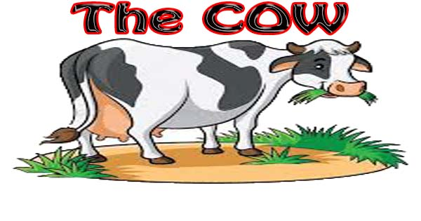 Write my essay on cow