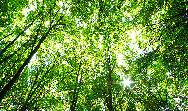 Вподмосковных лесах распространят около миллиона дозвакцины отбешенства