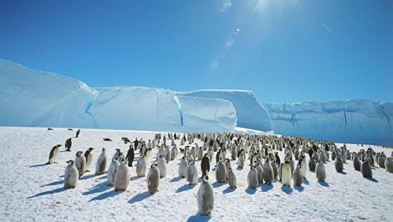 ВАнтарктике появится самый крупный вмире заповедник