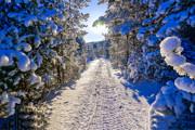 Обильный мокрый снег идет наРеспублику Коми