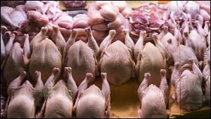 Россияне рискуют остаться безмяса птицы из-задефицита яиц