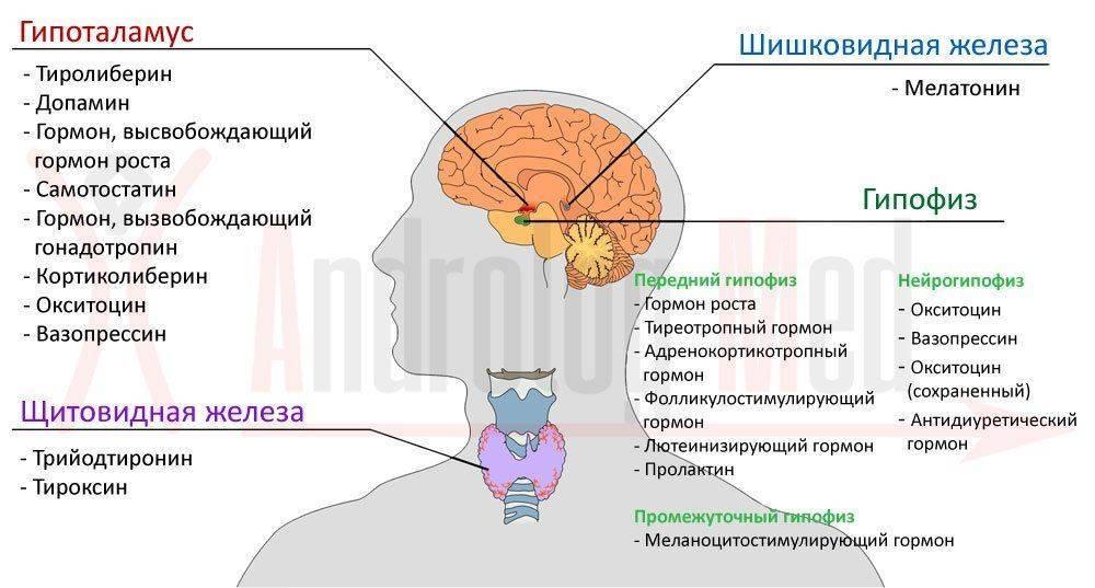 Какие гормоны сдавать при эректильной дисфункции
