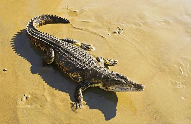 Колдун пообещал принести вжертву крокодилов исбежал