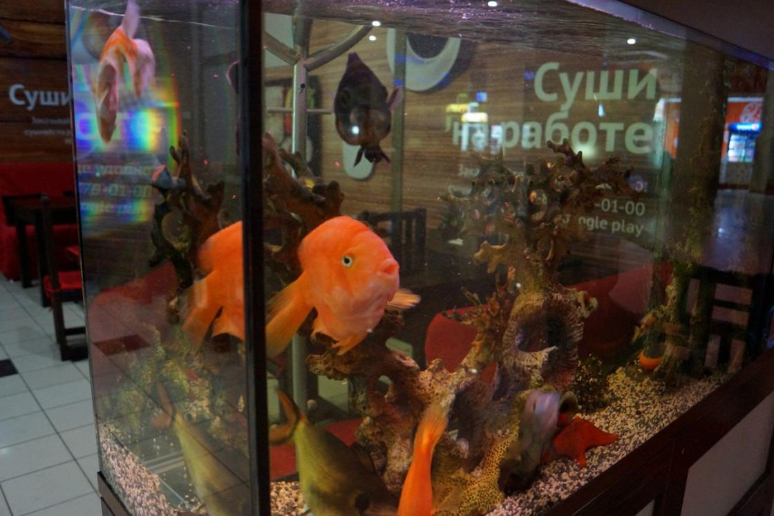 Ресторан Суши весла - фотография 4