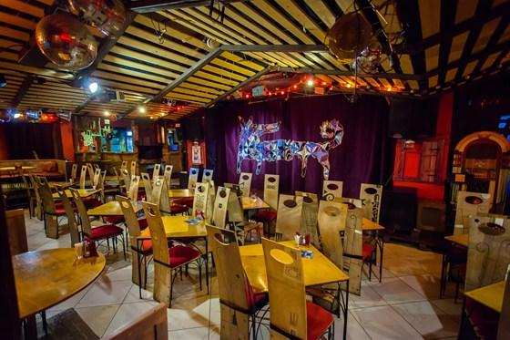 Ресторан Бродячая собака - фотография 5