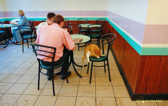 Ресторан Пышечная - фотография 3