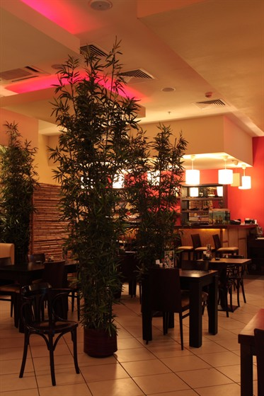 Ресторан Микатори - фотография 1 - японский зал