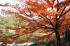 Хороший день. Япония в фотографиях