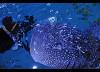 Черный плавник (Blackfish)
