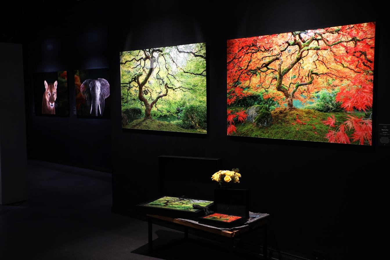 Фото галерея Surround Art Gallery