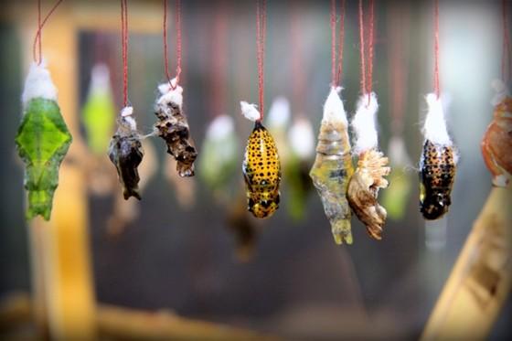 Фото парк бабочек