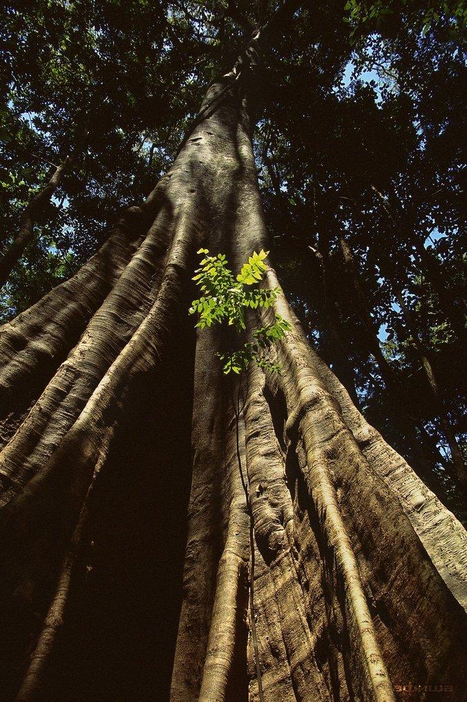Амазония: Инструкция по выживанию смотреть фото