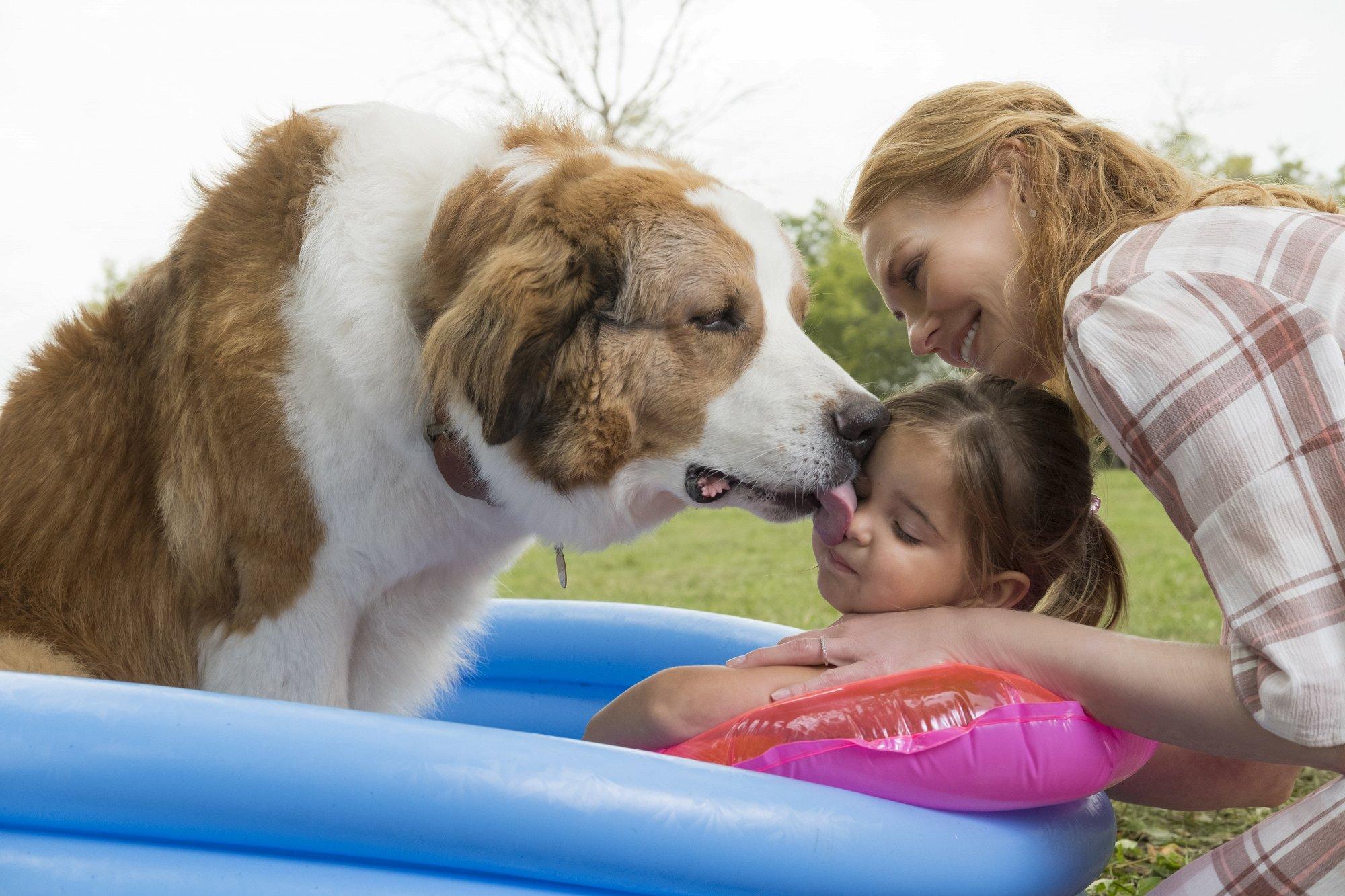 Собачья жизнь-2 смотреть фото