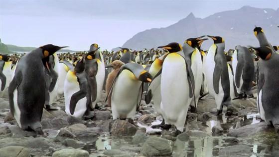 Король пингвинов 3D смотреть фото