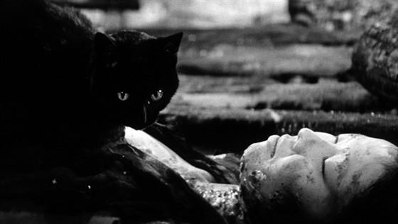 Черные кошки в бамбуковых зарослях смотреть фото