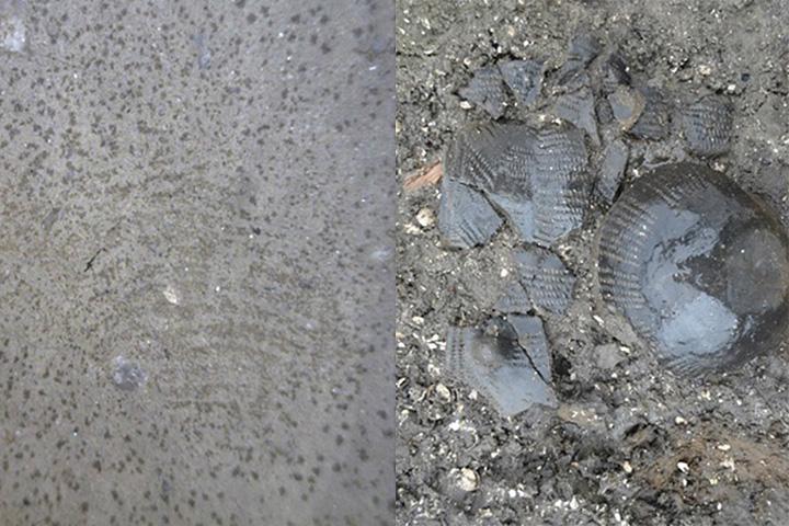 Древний отпечаток пальца