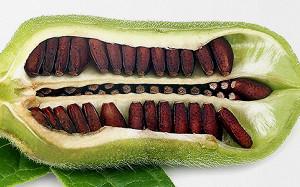 Насколько хорошо вы представляете, как растут привычные нам продукты в природе?