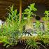 Ресторан Свадьба соек - фотография 4 - травы на нашей веранде