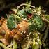 Ресторан I Like Grill - фотография 21