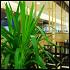 Ресторан Charlotte - фотография 7