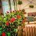 Ресторан Pilove Café - фотография 22 - Летняя веранда